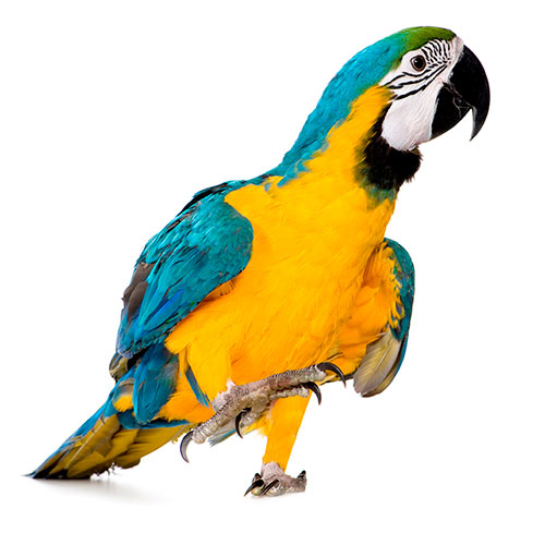 Pets answer: MACAW