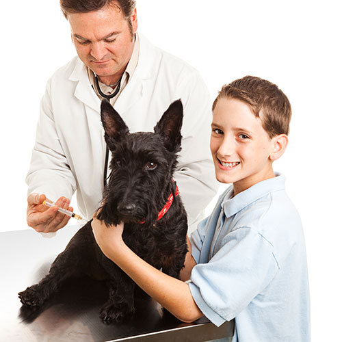 Pets answer: VACCINATION