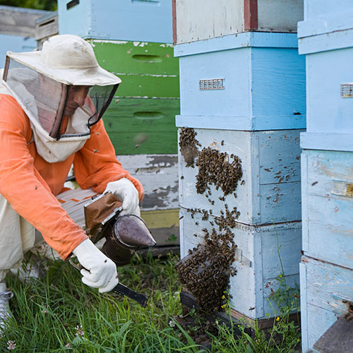 Science answer: APIARY