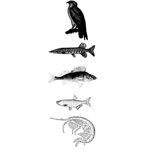 Science answer: FOOD CHAIN