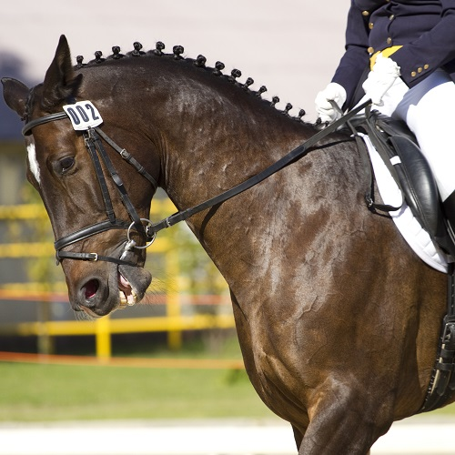 Sports answer: DRESSAGE