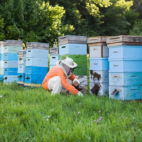 Spring answer: BEEHIVES