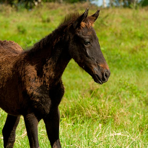 Spring answer: FOAL