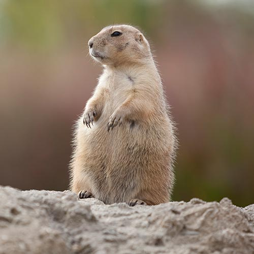 Spring answer: GROUNDHOG DAY