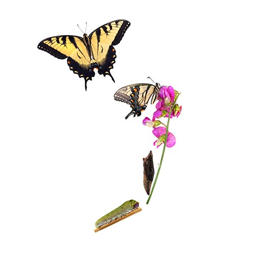 Spring answer: METAMORPHOSIS