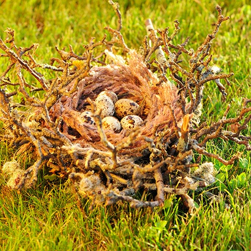 Spring answer: NEST