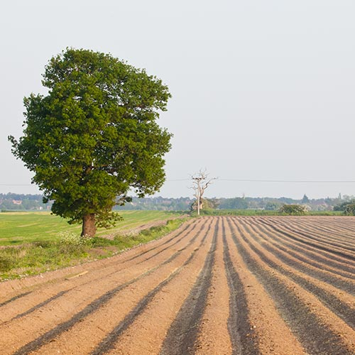 Spring answer: PLOUGHED