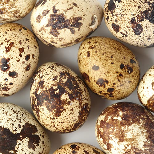 Spring answer: QUAILS EGGS