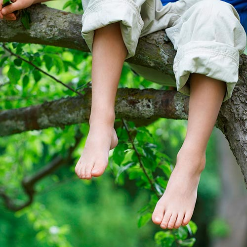Spring answer: TREE CLIMBING