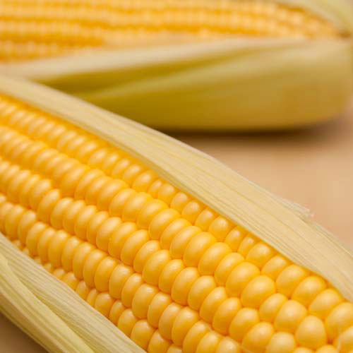 Taste Test answer: SWEETCORN