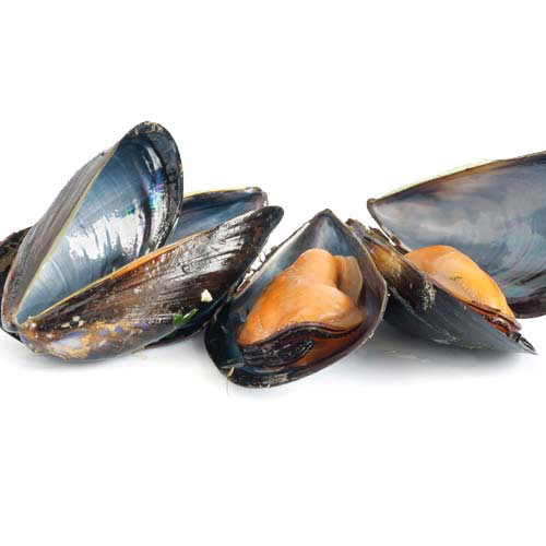 Taste Test answer: MUSSELS
