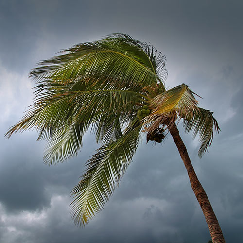 Weather answer: TROPICAL STORM