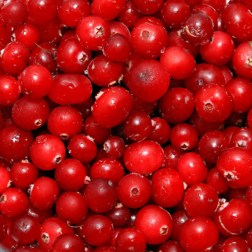 Winter answer: CRANBERRIES