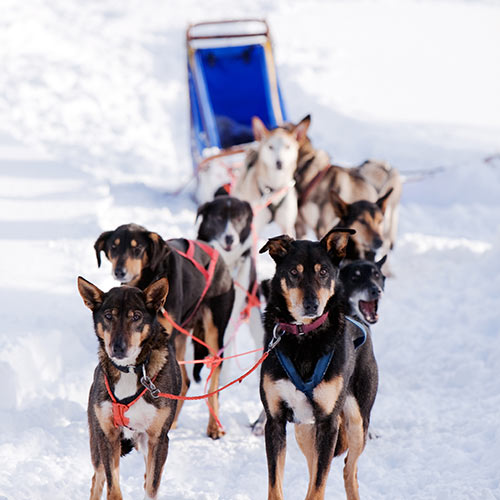 Winter answer: DOG SLED