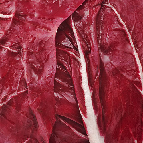 Winter answer: RADICCHIO