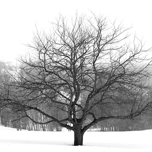 Winter answer: LEAFLESS