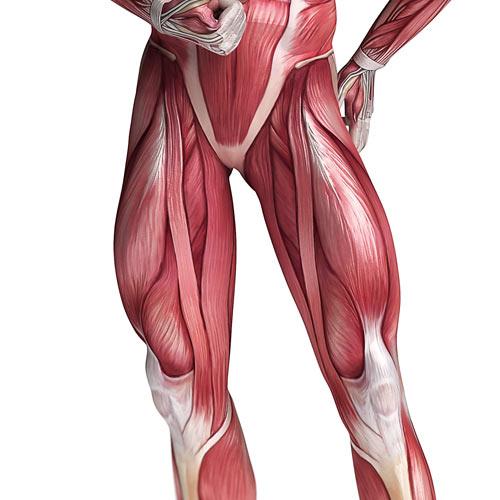 100 Fotos Anatomía 16 respuesta nivel: CUÁDRICEPS