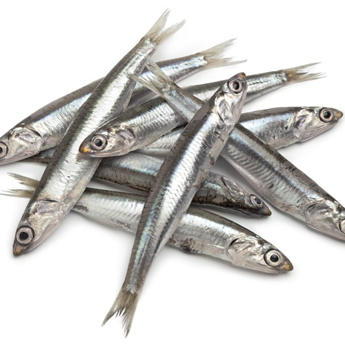 A is for... answer: ANCHOVIES