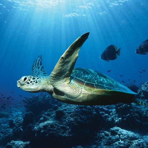Animal Planet answer: TORTUE DE MER
