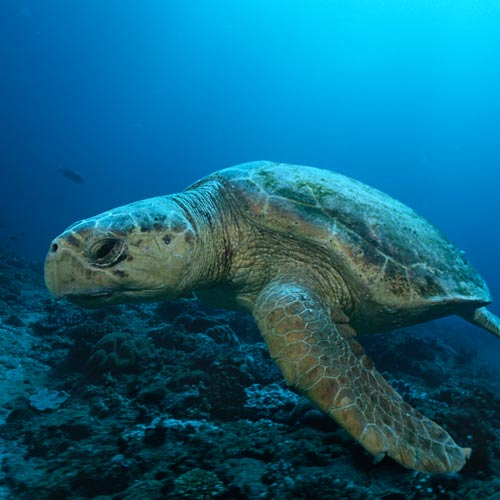 Animaux answer: TORTUE D'EAU