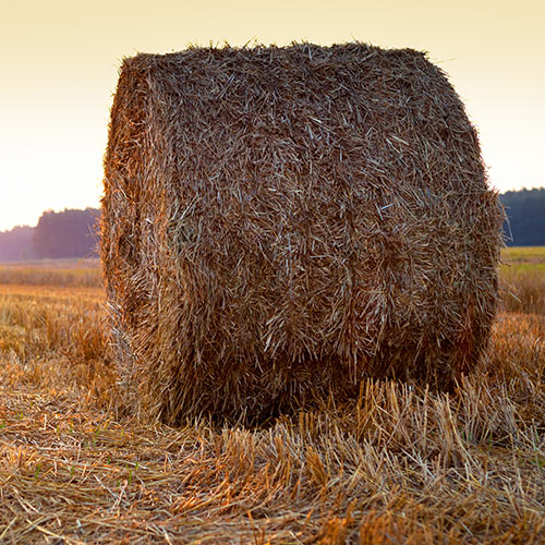 Autumn answer: BALE OF HAY