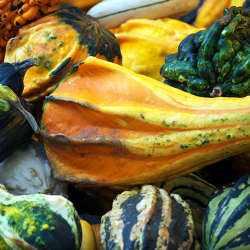 Autumn answer: GOURDS