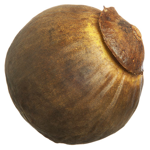 Autumn answer: SAPOTE