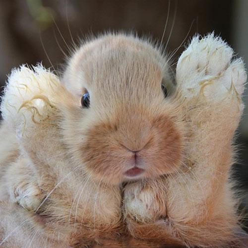 Baby Animals answer: RABBIT