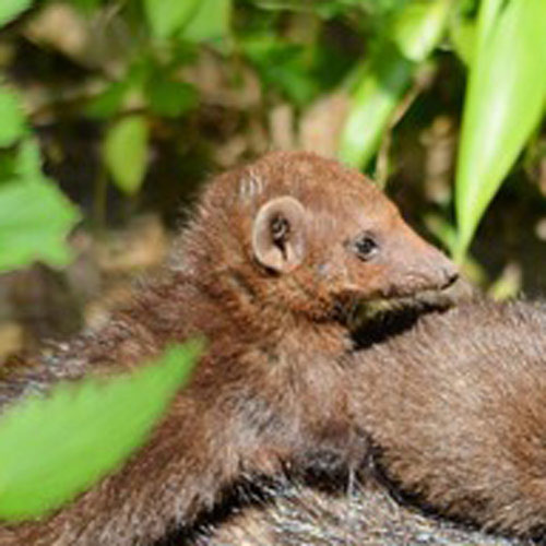 Baby Animals answer: WEASEL