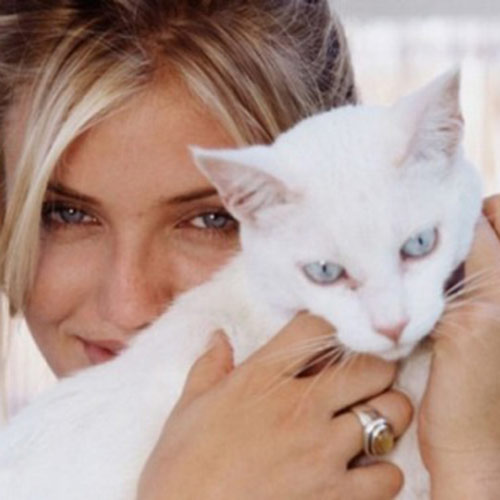 Cat Lovers answer: CAMERON DIAZ