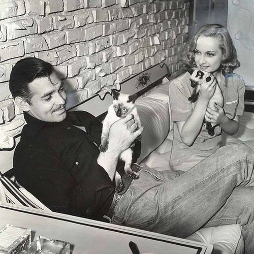 Cat Lovers answer: CLARK GABLE