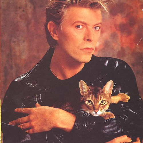 Cat Lovers answer: DAVID BOWIE