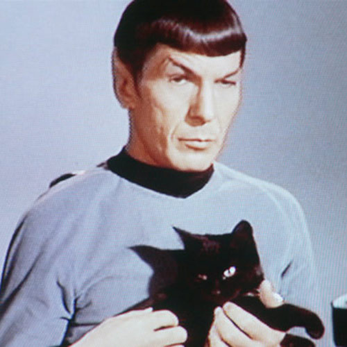 Cat Lovers answer: MR SPOCK