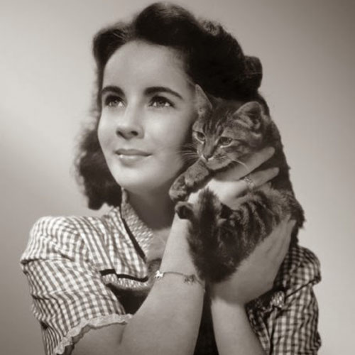 Cat Lovers answer: LIZ TAYLOR