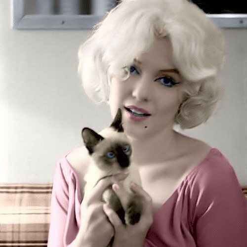 Cat Lovers answer: MARILYN MONROE