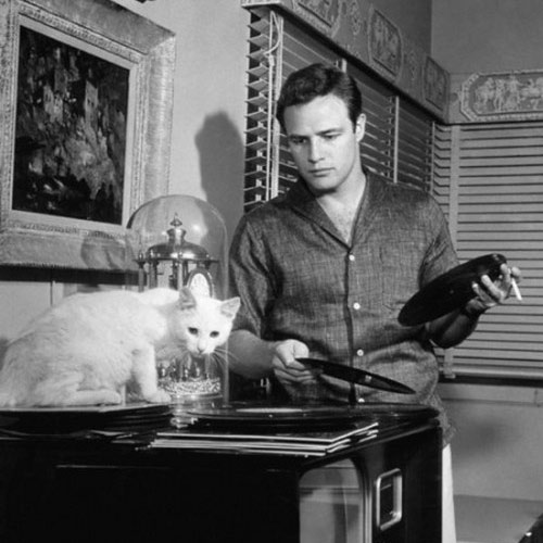 Cat Lovers answer: MARLON BRANDO