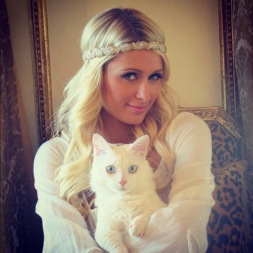 Cat Lovers answer: PARIS HILTON