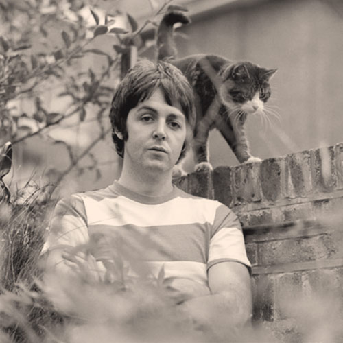Cat Lovers answer: PAUL MCCARTNEY