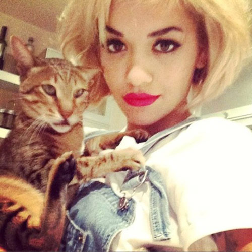 Cat Lovers answer: RITA ORA