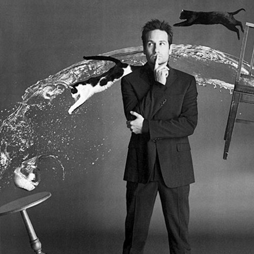 Cat Lovers answer: DAVID DUCHOVNY