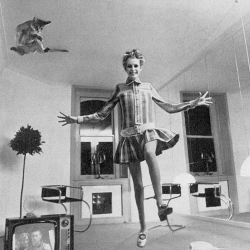Cat Lovers answer: TWIGGY