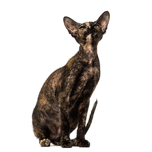 Cats answer: PETERBALD