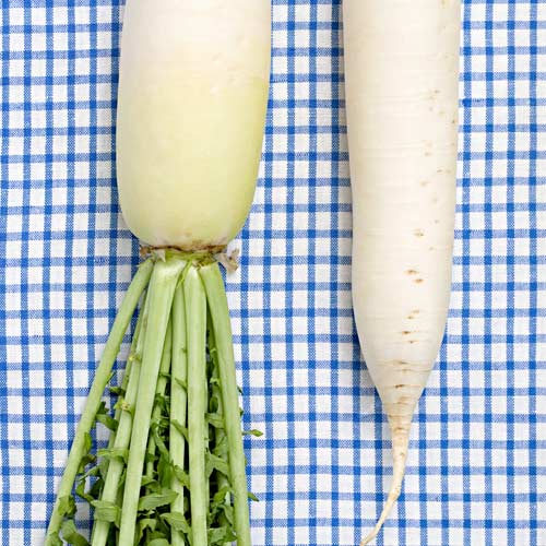 D is for... answer: DAIKON