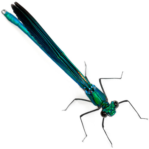 D is for... answer: DAMSELFLY