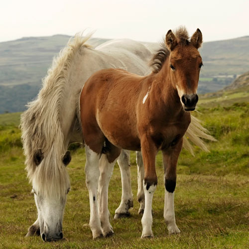 F is for... answer: FOAL