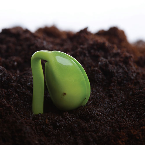 Gardening answer: GERMINATION