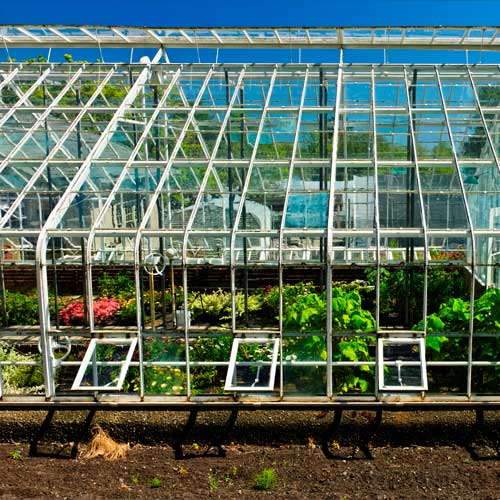 Gardening answer: GREENHOUSE
