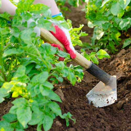 Gardening answer: HOE