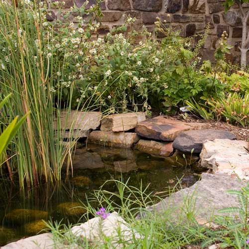 Gardening answer: POND