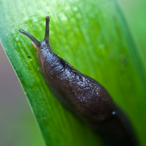 Gardening answer: SLUG